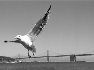 Bay Bridge, San Francisco. USA